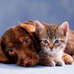rôle du dha dans l'éducation du chiot et du chaton