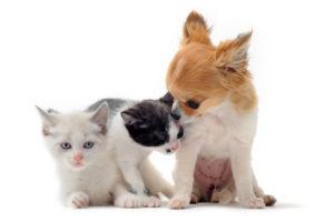 Chiots et chatons