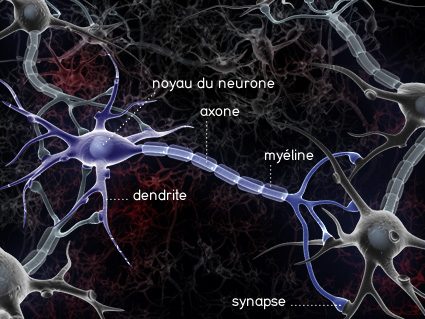 photo de neurone