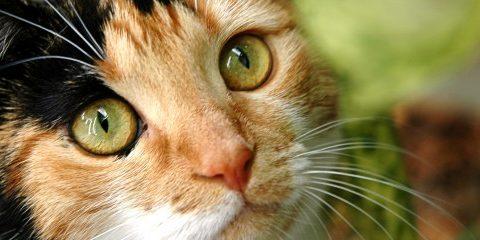comment soulager l'arthrose du chat