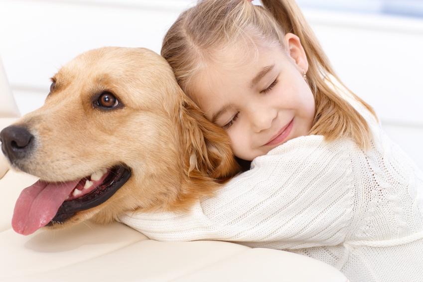 Dermatite du chien, eczéma, allergies : décidez de l'aider