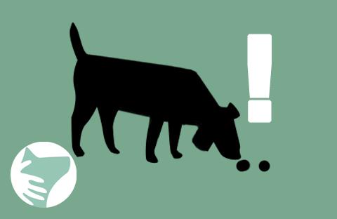 votre chien mange ses excrÉments