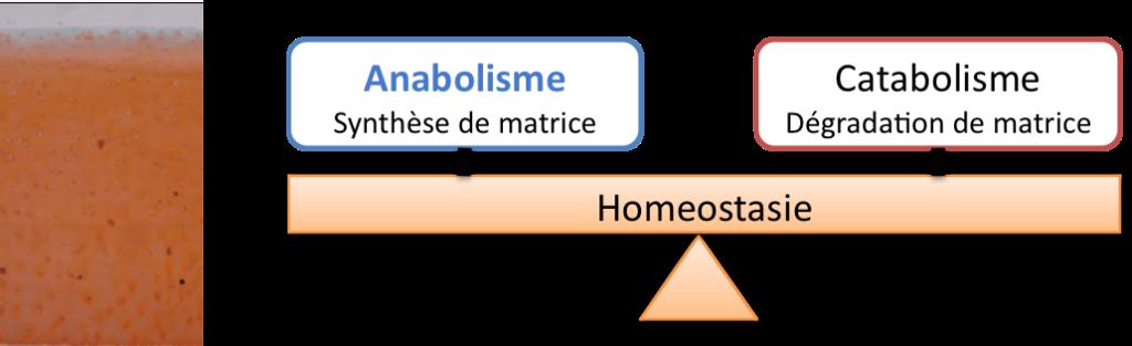 homeostasie1