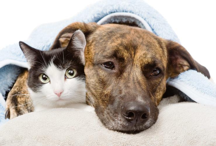 Produits non-classés pour chats et chiens